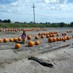 Bender Farm Pumpkin Patch