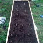 Garden Planted!